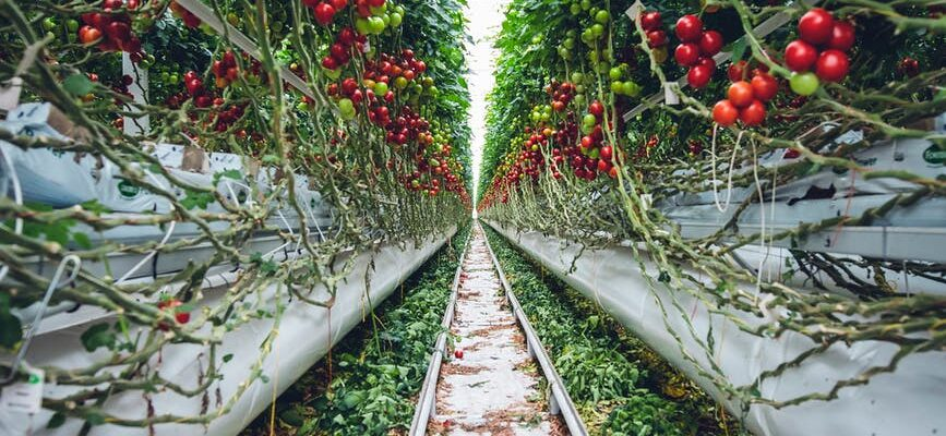 food healthy landscape tomatoes